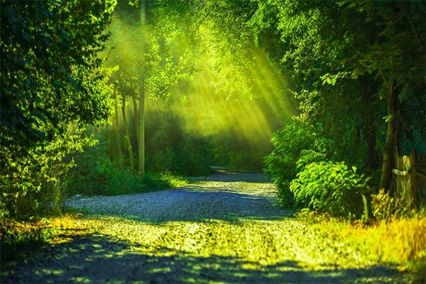 必要なエネルギーを自然界から吸収